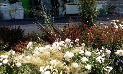 primavera-mantenimiento-jardin